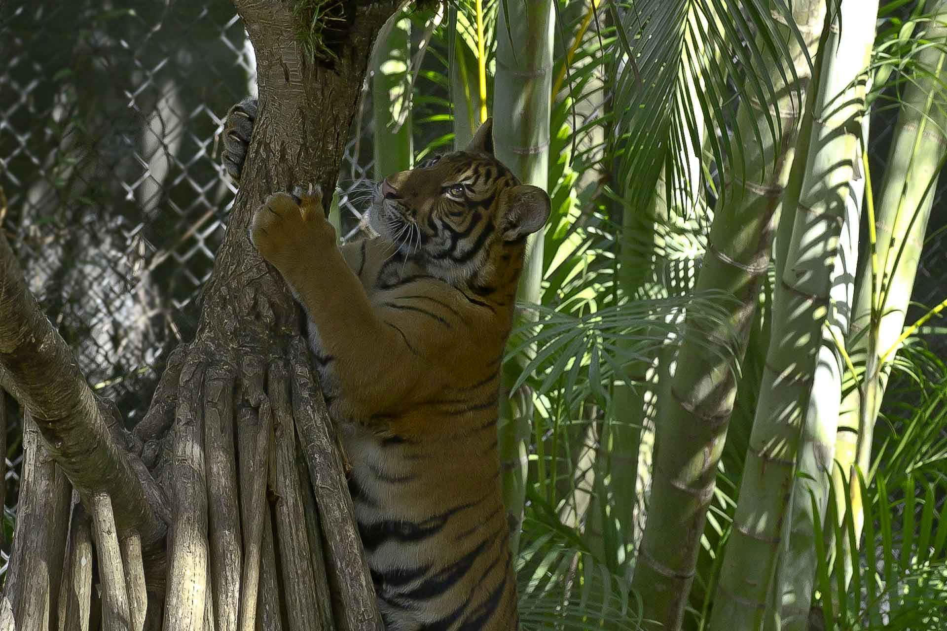 June, 2012 - The Palm Beach Zoo...Come Visit This Summer ...