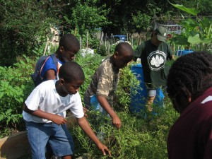 Greyston Foundation's Community Garden