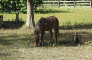 A horse, living the good life at The Good Earth Farm