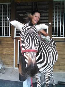 Massage therapist Candy Giordano gives Ozzy the Zebra a massage