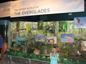 "One of the new exhibits - ""The Hidden World of the Everglades"""