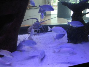 "Part of the new aquarium at the South Florida Science Center, recently featured on the show ""Fish Tank Kings"""