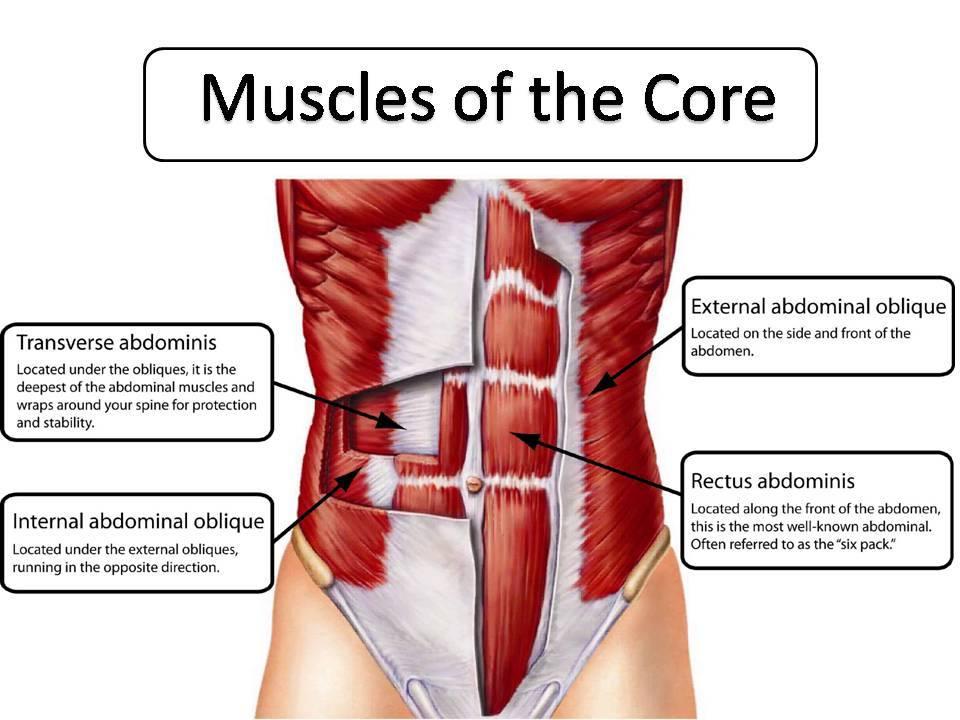 core muscles - AroundWellington.com, online publication for ...