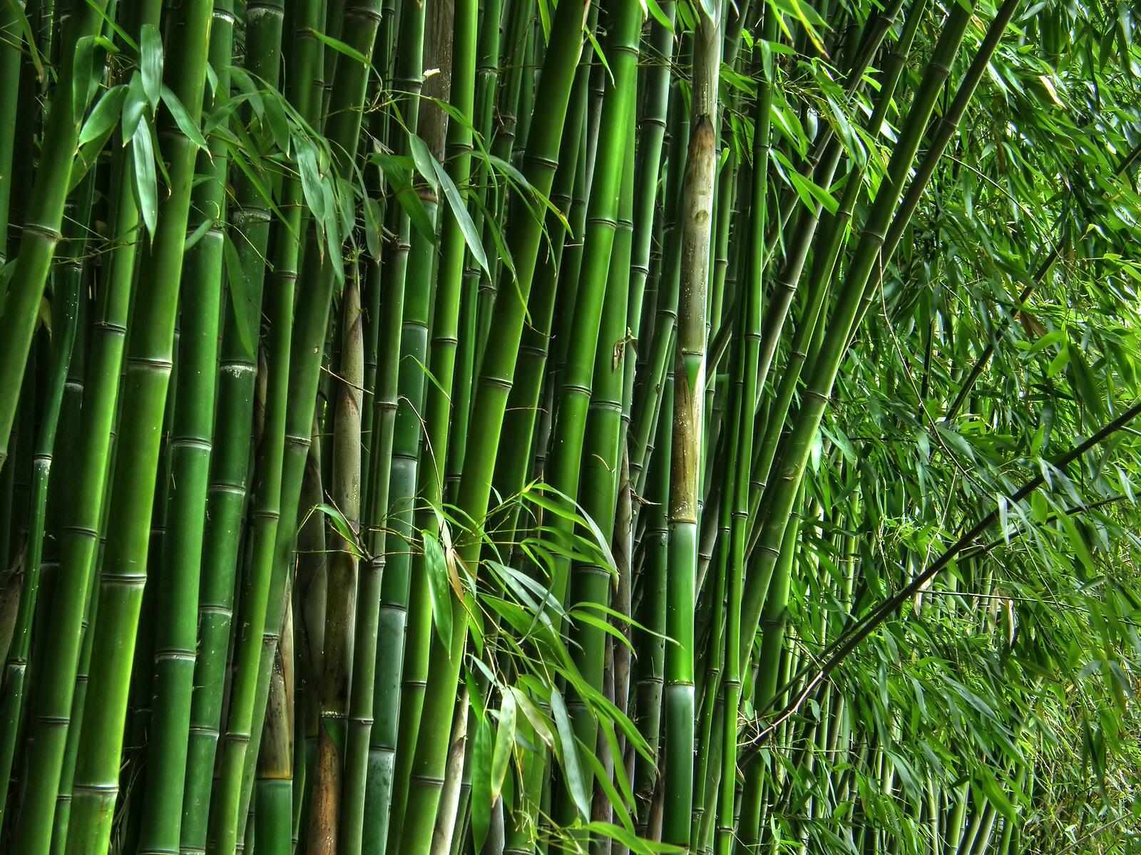 """Tropical Bamboo in the U.S.,"" - AroundWellington.com ..."