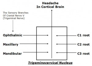 trigeminal-diagram