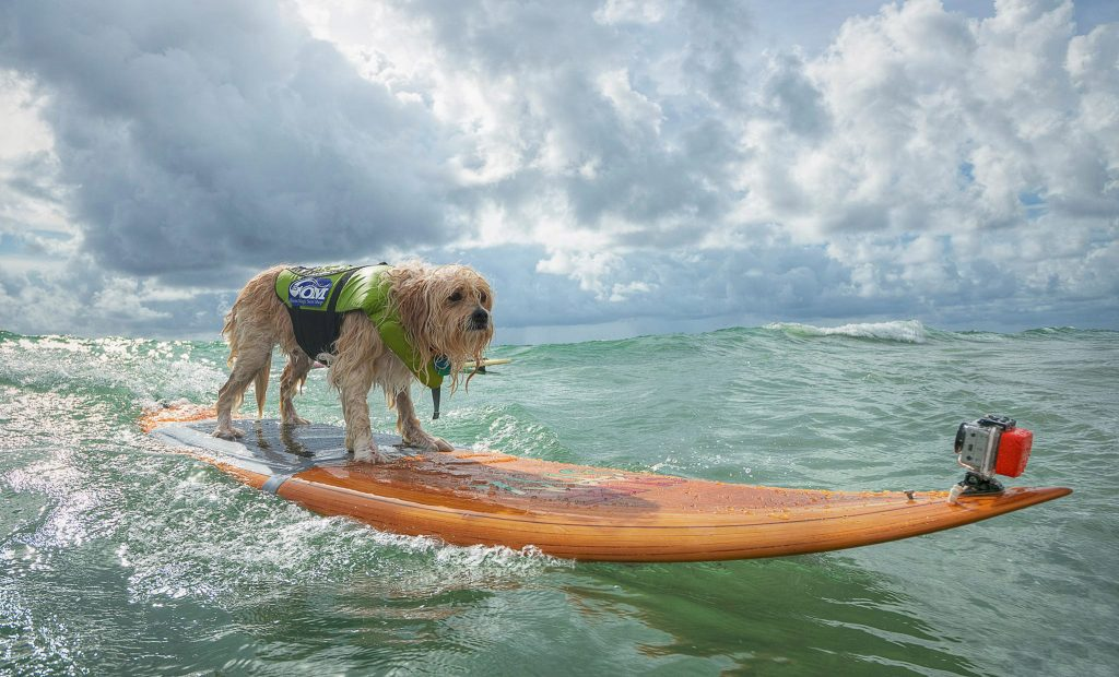 Furry Friends 2nd Annual Hang 20 169 Surf Dog Classic A