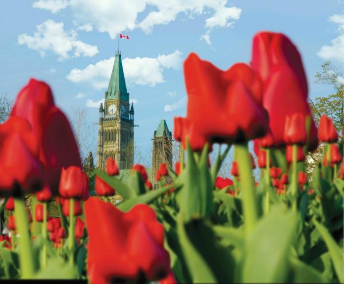 tulip festivals on Travel with Terri