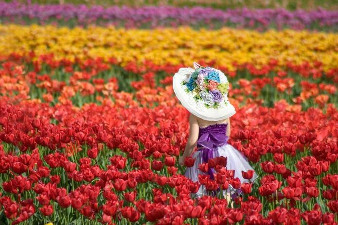 Tulip festival on Travel with Terri