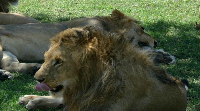 Tanzania safari travel with terri