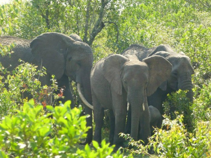 Elephant family on the Serengeti on a Tanzania Safari Travel with Terri